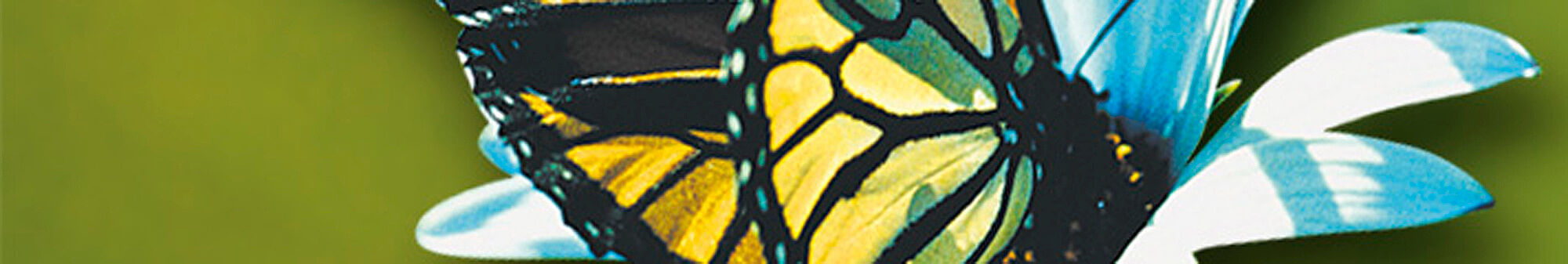 ROHS Reach Titelbild 2000px